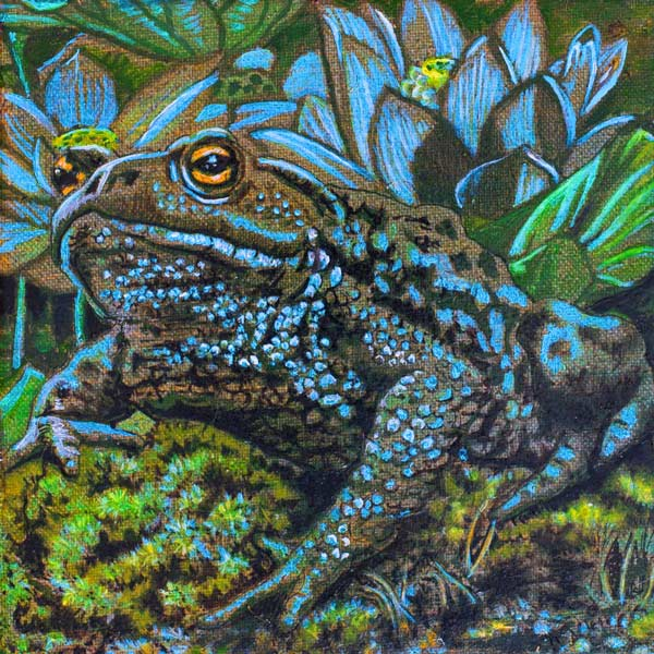Blue Lotus The perfect toad